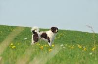 Picture of Wetterhound in field