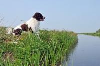 Picture of Wetterhound near stream