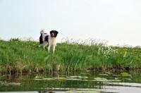 Picture of Wetterhound near waterside