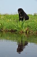 Picture of Wetterhound near water