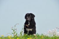 Picture of Wetterhound